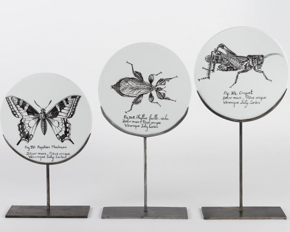 """Disques de curiosité """"Oiseaux - Insectes - Fossiles"""""""