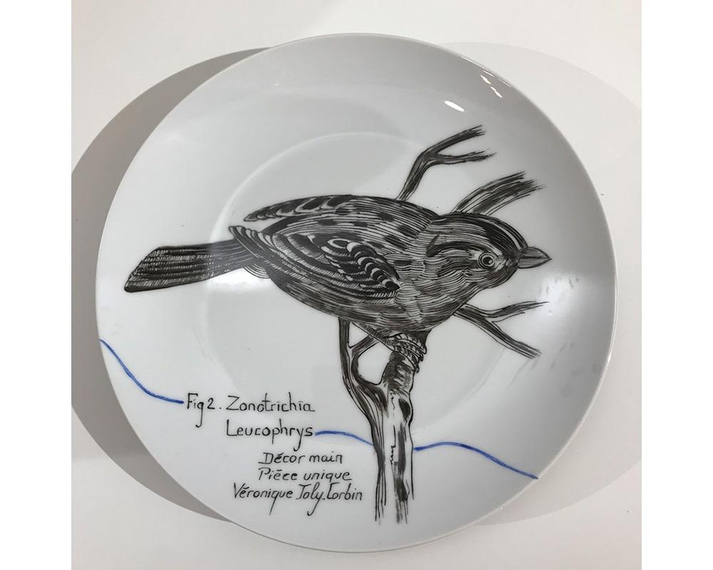 """Composition murale """"Histoire sur socle - Plume"""" - Oiseau Zonotrichia Leucophrys"""