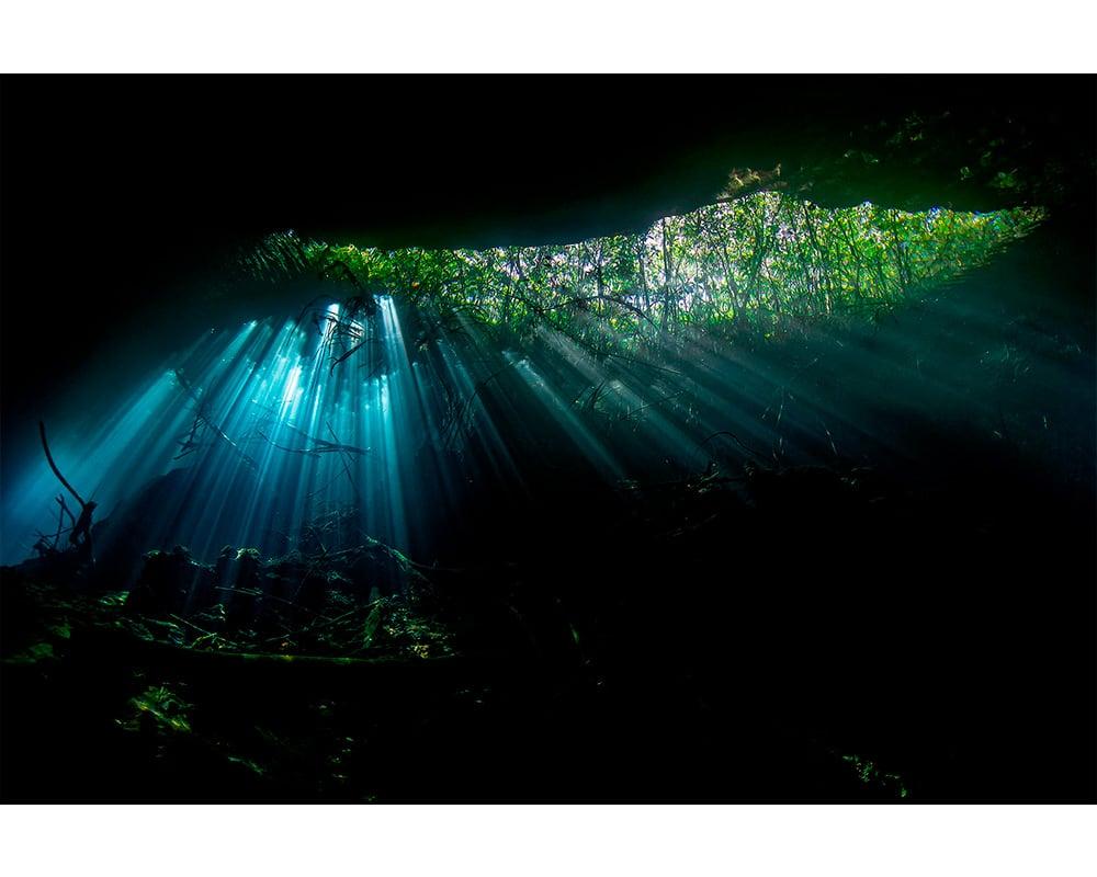 MAGIC FOREST - Photographie sous-marine de Fabrice Guérin